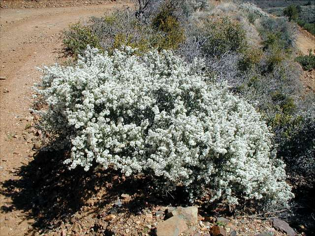 Flowers To Plant In Spring In Arizona