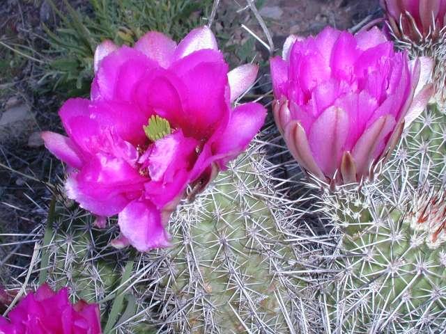 Univ Of Arizona >> Flowers